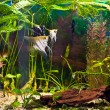 Foto Stock: Aquarium with many fish and plants