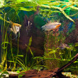 Aquarium with many fish and plants — Photo