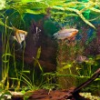 Aquarium with many fish and plants - 