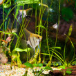 Aquarium with many fish and plants - Stockfoto