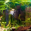 Aquarium with many fish and plants — Stock Photo