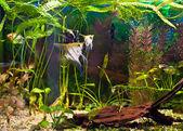 Akvarium med många fiskar och växter — Stockfoto