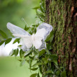 Wedding decoration with lace butterfly on a tree outdoor — Stock Photo
