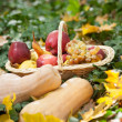 Different fruits and vegetables in basket on green grass. Autumn harvest vegetables outdoor (grapes, apples, pumpkin). Autumnal harvest vegetables and fruits in basket in a park. Thanksgiving — Stock Photo #35534435