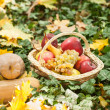 Different fruits and vegetables in basket on green grass. Autumn harvest vegetables outdoor (grapes, apples, pumpkin). Autumnal harvest vegetables and fruits in basket in a park. Thanksgiving — ストック写真