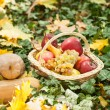 Different fruits and vegetables in basket on green grass. Autumn harvest vegetables outdoor (grapes, apples, pumpkin). Autumnal harvest vegetables and fruits in basket in a park. Thanksgiving — Foto Stock