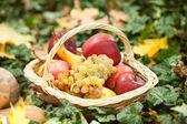 さまざまな果物や野菜バスケット緑の芝生の上で。秋の収穫野菜屋外ブドウ、りんご (カボチャ)。秋の収穫野菜や果物の公園でバスケットで。感謝祭 — ストック写真