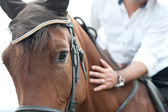 Closeup of a horse head with detail on the eye and on rider hand. harnessed horse being lead - close up details. a stallion horse being riding. A picture of an equestrian on a brown horse in motion — Stock Photo