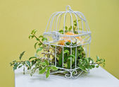 Decoration of bright orange and green colorful flower in white cage. wedding decoration with bird cage and flowers. Flower in beautiful vintage birdcage. Wedding decor idea. — Stock Photo