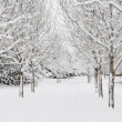 Winter path — Stockfoto #12682334