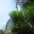 Egret in the Pine — Stock Photo #12020573