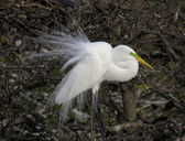 Egret Feathers — Stock Photo