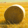 Stock Photo: Haystack