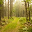 Stock Photo: In depth of forest