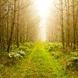 beautiful morning in forest - road of forest — Stock Photo