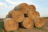 Haymaking — Stock Photo
