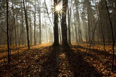 In the depth of the forest — Stock Photo
