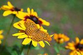 Mariposa en flor amarilla — Foto de Stock