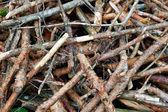 Secado de ramas del pino. — Foto de Stock