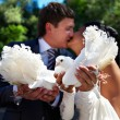 Kiss the bride and groom with the pigeons — Stock Photo