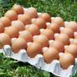Pack of eggs — Foto de Stock