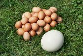 鸡肉和鸵鸟蛋 — 图库照片