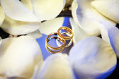 Gold wedding rings with petals — Stock Photo