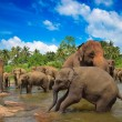 Elephants in the river — Stock Photo
