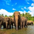 Elephant group in the river — Stock Photo