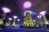 Night view of Supertree Grove at Gardens — Stock Photo