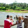 Tourists in Elephant orphanage — Stock Photo