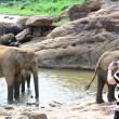 Tourists in Elephant orphanage — Stock Photo #33024177