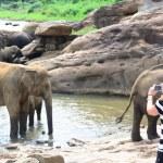Tourists in Elephant orphanage — Stock Photo