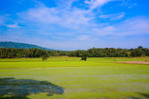 Beautiful rice paddy field — Stock Photo