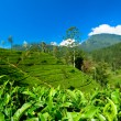 Stock Photo: Adam's Peak mountain