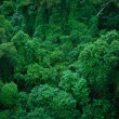 Green Rainforest — Stock Photo