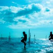 Sri lankan traditional stilt fisherman — Stock Photo