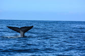 Big blue whales in deep ocean — Foto de Stock