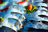 Various fish in the fish market — Stock Photo