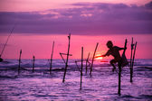 The Traditional Stilt Fishermen in Srilanka — Stock Photo