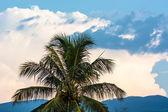 Palm tree — Стоковое фото