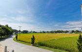 рисовые поля — Стоковое фото