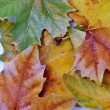 Pile of leaves in various colors — Stock Photo #16209099