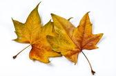 чересстрочный листья — Стоковое фото