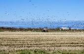 Rice harvest — Stock Photo
