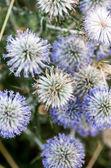 Texture de fleurs 2 — Photo
