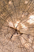 Texture tree 2 — Stock Photo