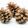 Stock Photo: Pinecone 6