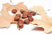 Chestnuts and leaves 2 — Stock Photo
