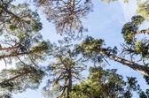Treetops 2 — Stock Photo